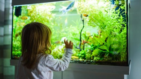 A girl looks into an aquarium